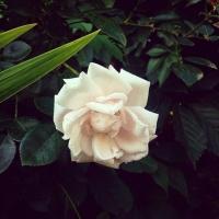Разыскивается 16-летняя омичка с рисунком розы на голени