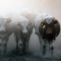 Омские пожарные спасли от огня почти 300 животных