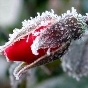 На грядущих выходных в Омской области ожидаются заморозки