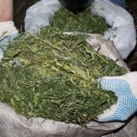 У жителей севера Омской области изъяли 3,5 килограмма марихуаны