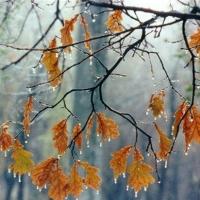 В Омске на смену дождям снова придет снег