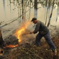 В Омской области ликвидированы два первых лесных пожара