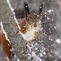 На смену теплу в Омск придет снег