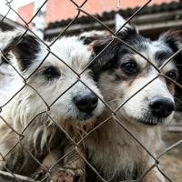 В Омске на этой неделе решат, что станет с бездомными собаками
