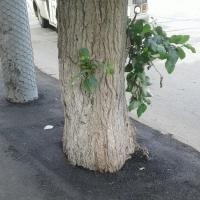 Казимиров заявил, что в Омске не все дорожники знают, как обращаться с деревьями