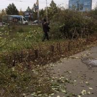 Горожан возмутила массовая вырубка деревьев в центре Омска