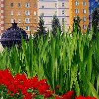 Сквер 30-летия ВЛКСМ в Омске стал особенным благодаря клумбе с гладиолусами