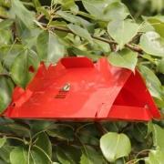 В омских лесах развесят феромонные ловушки