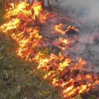 В Омской области в первые дни мая произошло 28 лесных пожаров