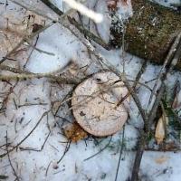 В Омской области поймали черных новосибирских лесорубов