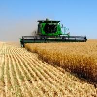Омская область отправила на экспорт более 50 тысяч тонн зерна