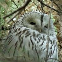 Омичи обсуждают очередную полярную сову, прилетевшую из Хогвартса