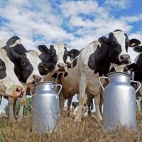 Животноводство Омской области стало продуктивнее