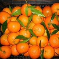 В Омске мужчина украл из грузовика два ящика с фруктами