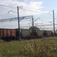 Омское зерно экспортируется в Китай по железной дороге
