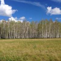 В Омской области можно взять лес в аренду