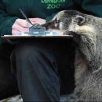 С 1 января в Омской области начнется перепись диких животных