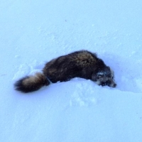 Министерство природы Омской области поделилось итогами фотоохоты