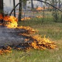 В Омской области объявлен наивысший класс пожарной опасности