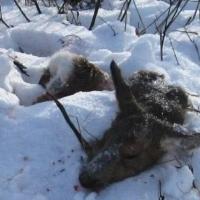 В Омской области свирепствуют браконьеры