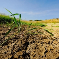 СМИ: Граждане Армении украли 10 гектаров омской почвы