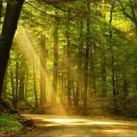 Более пяти тысяч жителей Омской области приняли участие в акции «Чистый лес»