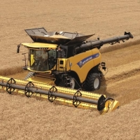Омским аграриям предстоит убрать с полей 14 тысяч гектаров озимой пшеницы и ржи