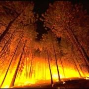 Омичи смогут зачекиниться на лесном пожаре