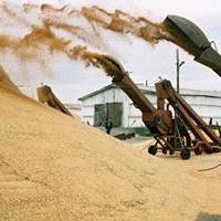 Аграриям Омской области посоветовали пока не продавать зерно
