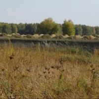 Омский регион на втором месте в России по площади выращивания льна