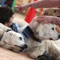 Омский благотворительный центр зоотерапии «Дверь в лето» ищет волонтеров