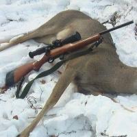 Омских браконьеров, убивших трех косуль, будут судить