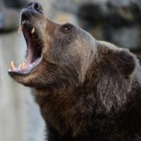 Жителей Большеречья спасли от медведей