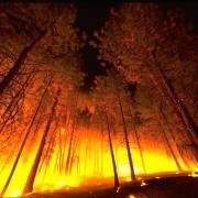 """Омский """"Прогресс"""" нашел способ борьбы с лесными пожарами"""