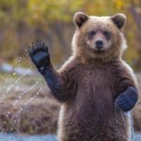 Медведь «угнал» внедорожник в США