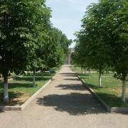 Двадцать новых деревьев омичи и гости Омска высадили члены иностранных делегаций