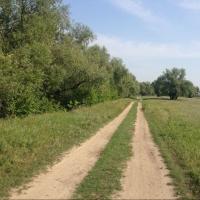 В Омской области грузовик задавил пешехода в лесу