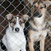 Пропавшие собаки с 4-ой Северной находятся в омском специализированном питомнике
