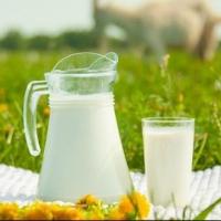 В омских магазинах появится козье молоко местного производства
