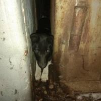 В Омске вызволили пса, застрявшего между гаражей