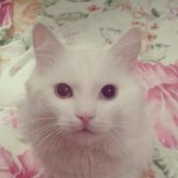 """В Омске появился кот-""""хатико"""", который дождался своего хозяина"""