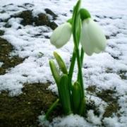 Весна в Омске наступит на этой неделе