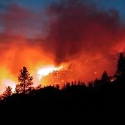 В Омской области сгорело 20 га лесов
