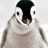 Россиянам в Антарктиде запретили пугать пингвинов, рисовать граффити и курить в неположенных местах
