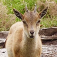 Обитатели Большереченского зоопарка ждут даров осени