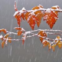 Первый снег выпадет в Омской области уже на следующей неделе