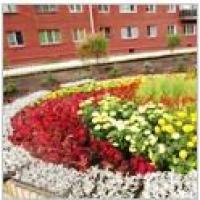 Более 4000 цветов высадили в новом сквере Омска