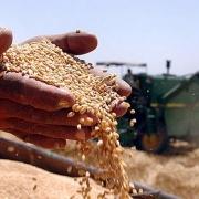 В Омской области собрали рекордный урожай