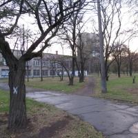 Депобразования Омска ищет 78 млн рублей на вырубку и кронирование деревьев
