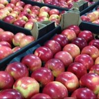 В Омскую область из Казахстана пытались незаконно провести 60 тонн фруктов